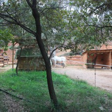 CENTRE HIPIC CASTELL DE BEN VIURE - HIPICA BARCELONA PUPILATGE DE CAVALLS - HIPICA BARCELONA PUPILAJE DE CABALLOS